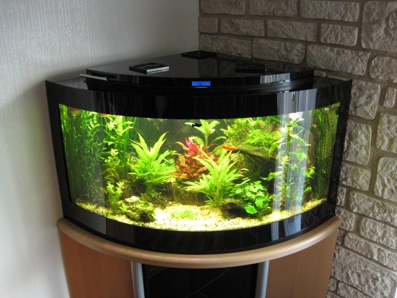 aquarium kosten strom kosten. Black Bedroom Furniture Sets. Home Design Ideas